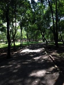 A pista do Ibirapuera